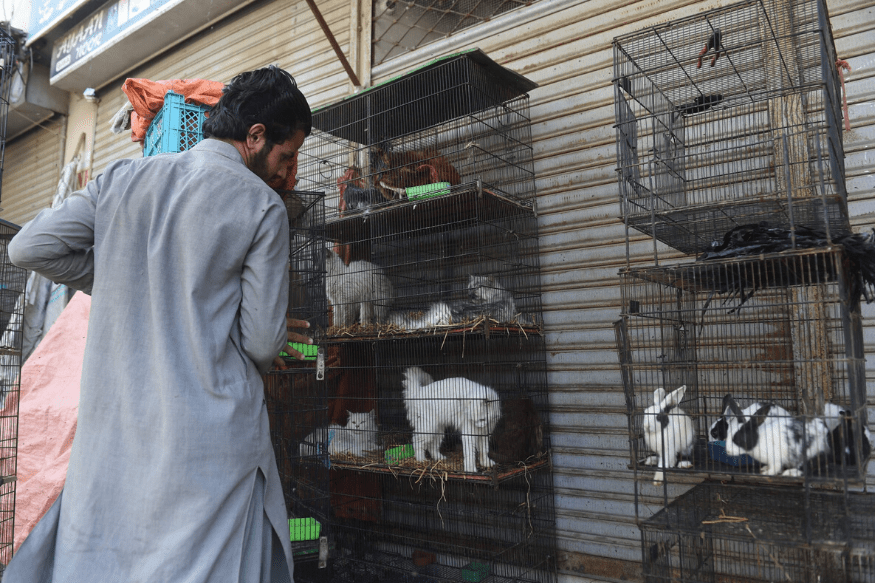 Animal rights in Pakistan